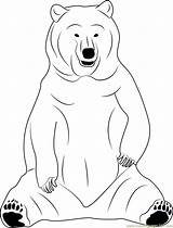 Bear Coloring Sitting Coloringpages101 Sloth Designlooter sketch template