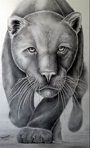 my panther drawing pencil graphite | My Art | Pinterest ...