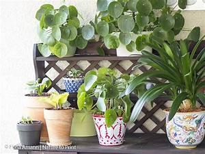 Robuste Zimmerpflanzen Groß : verstaubte zimmerpflanzen reinigen regen ist gut f r alle pflanzen ~ Sanjose-hotels-ca.com Haus und Dekorationen