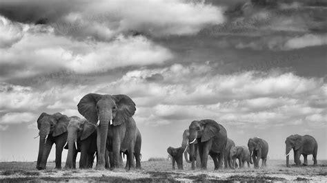 Royal Safari