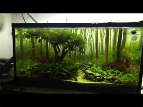 Aquascape Forest by Aquascaping Forest