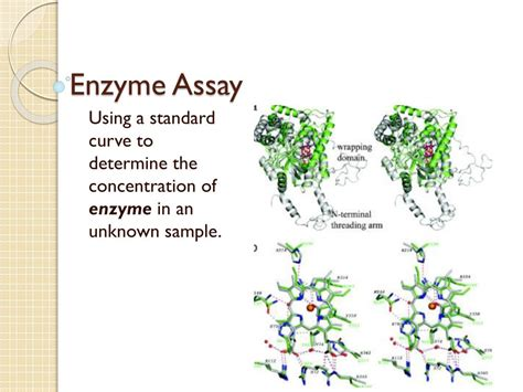 PPT - Enzyme Assay PowerPoint Presentation, free download ...