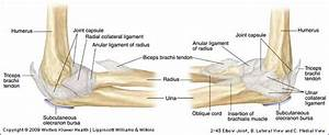 Hyper-Extension Elbow Injuries | POGO Physio Gold Coast