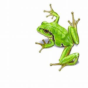 Green Frog Designs : best 25 frog drawing ideas on pinterest google images mouse illustration and tree frog tattoos ~ Markanthonyermac.com Haus und Dekorationen