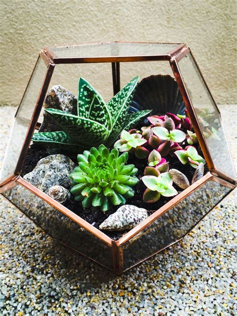 25 best ideas about indoor succulents on