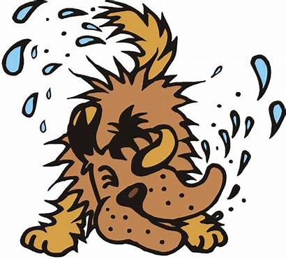 Wet Dog Clipart Dry Shake Dogs Clip
