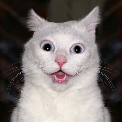 Funniest & Cute Cat Faces  Funny And Cute Animals