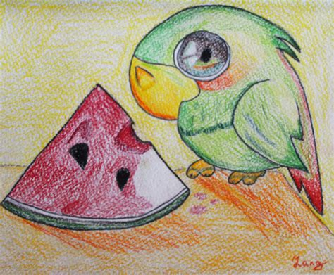 amazon parrot birds drawings pictures drawings ideas