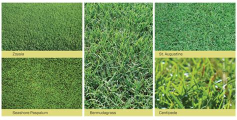 A Review Of Turfgrasses Used In Hawaii