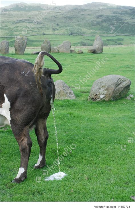 domestic animals peeing  stock picture