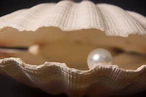 Like how on Earth do Clams make Pearls? | by Mitch