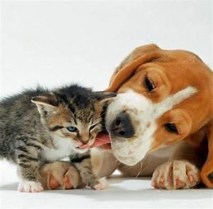 Vermieter Verbietet Hund : mietrecht bgh kippt verbot von hunden und katzen welt ~ Lizthompson.info Haus und Dekorationen