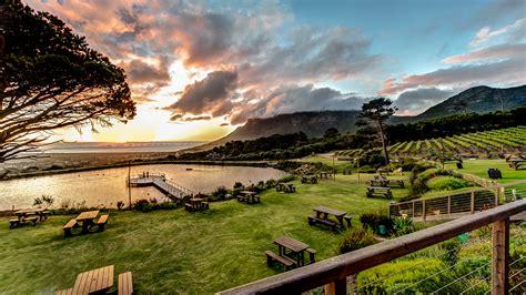 picnics  cape point vineyards cape point vineyards