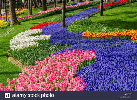 istanbul tulip festival in emirgan colorful flowerbed in istanbul tulip festival emirgan park turkey stock photo royalty free