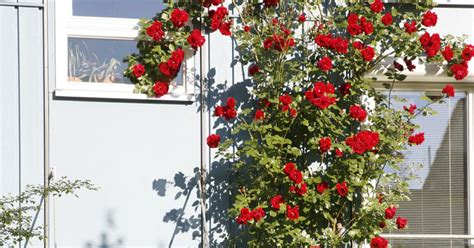 Sondereigentum Garten