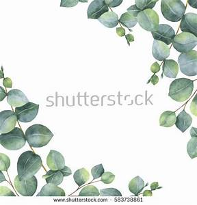 Eucalyptus Stock Images, Royalty-Free Images & Vectors ...