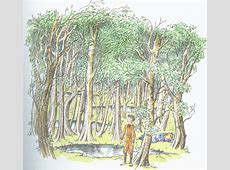 Wood Between the Worlds The Chronicles of Narnia Wiki