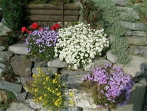 Pflanzen Für Steingarten : die richtigen pflanzen f r den steingarten gartentipps ~ Michelbontemps.com Haus und Dekorationen