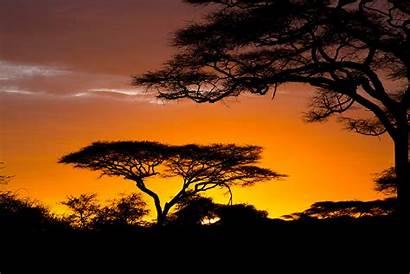 Safari African Africa Sunrise Wallpapers Wallpapersafari Nature