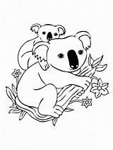 Koala Coloring Popular sketch template
