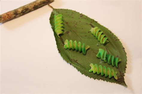 how to make a butterfly cocoon search 485 | 27c02069c75d0a172f382c157dba55c5