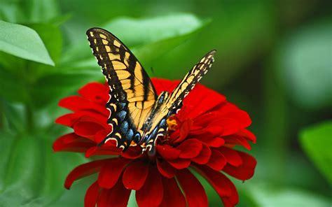 Feathers flowers hd desktop wallpaper. Beautiful Butterflies and Flowers Wallpapers (56+ images)