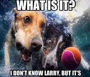 Cute Dog Quote | Cute Pet Quotes | Pinterest
