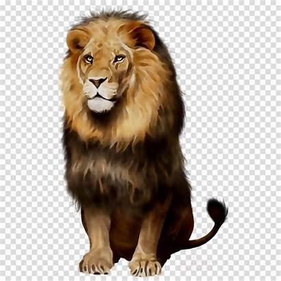 Lion Clipart African Lions Transparent Cartoon Wildlife