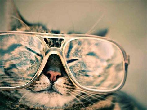 HOY es Día Internacional del gato, ¿Sabes por qué se ...