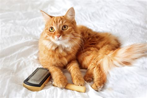 cat grooming cat grooming tips blain s farm fleet blog