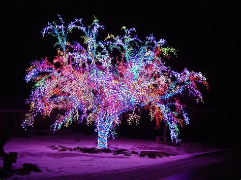 light up outdoor trees christmas this crab apple tree has over 75 000 lights lining every