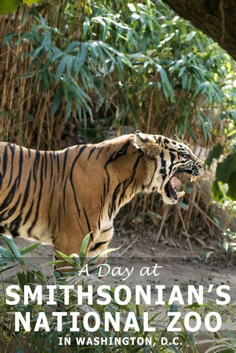 national zoo washington smithsonian dc