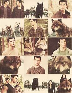 Jacob's Pack images Wolf pack wallpaper and background ...