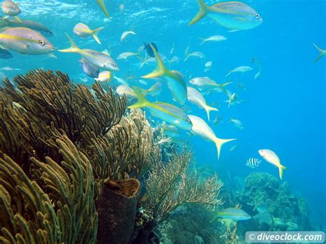 Best Dive Spots In The Caribbean by Top 5 Caribbean Dive Spots Dive O Clock