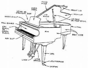 Dimensions Baby Grand Piano | Home Design