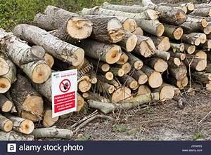 Bild Auf Holz : betreten sie nicht auf holz schild auf gef llten baumst mmen feuchtgebiete newport wales uk ~ Frokenaadalensverden.com Haus und Dekorationen