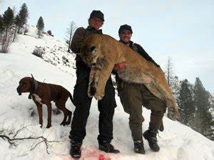 """Endangered Species """"Puma"""": What its Threats are"""