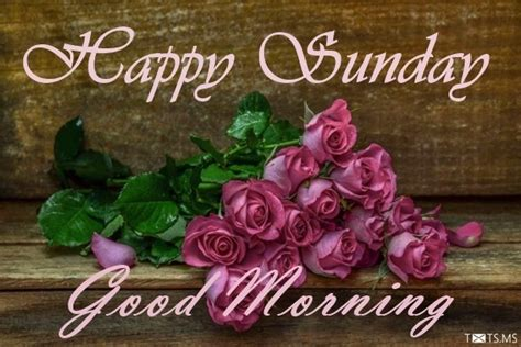 happy sunday wishes messages quotes images  facebook whatsapp picture sms txtsms