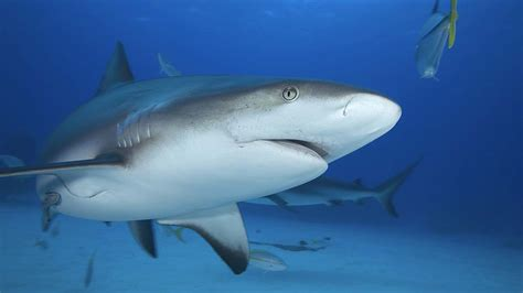 lessons    shark tank smallbizclub