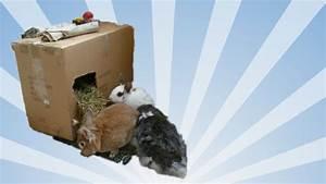 Kaninchenkäfig Für 2 Kaninchen : manchmal reicht ein karton zum gl cklich sein stundenlanger spa f r kaninchen selber ~ Frokenaadalensverden.com Haus und Dekorationen