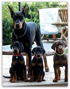 #Dobermans | doberman pinschers | Pinterest | Mom ...