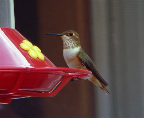 laura s birding blog look carefully at those hummingbirds