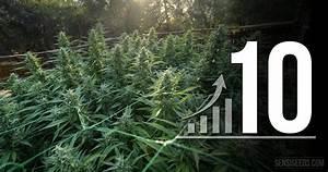 10 astuces pour optimiser votre espace de culture de cannabis for Mini chambre de culture cannabis