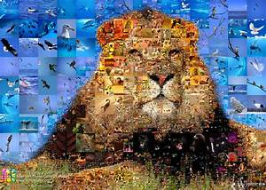 Fotos Als Collage : photo collage king of animals beschreibung programmparameter f r das erstellen ~ Markanthonyermac.com Haus und Dekorationen