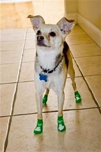 why socks for dogs