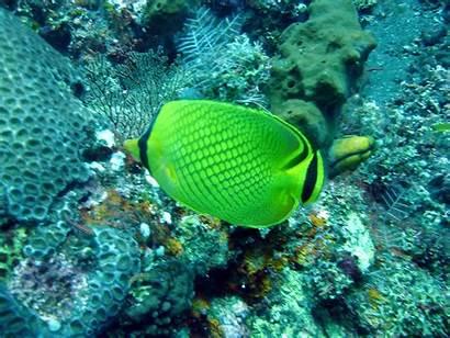Fish Fishes Wallpapers Desktop Bali Tropical Diving