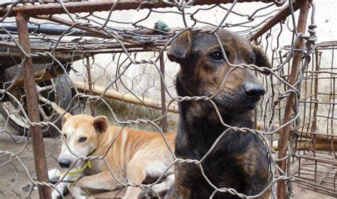 dog meat victory indonesia bans horrific dog meat trade