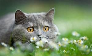 Really cute cat - Rumble