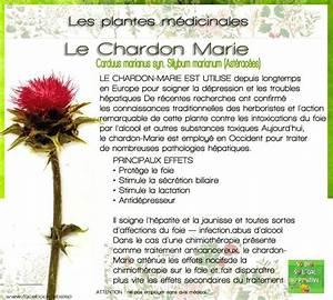Chardon Marie Plante : plante m dicinale le chardon marie so 39 phyto pinterest sant chardon marie et bien tre ~ Dode.kayakingforconservation.com Idées de Décoration