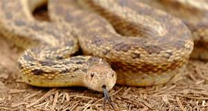Do Snake Repellers Work  Your Guide To Snake Repellents